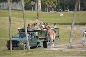 February 2015 Newsletter Florida Review And Travel Guide