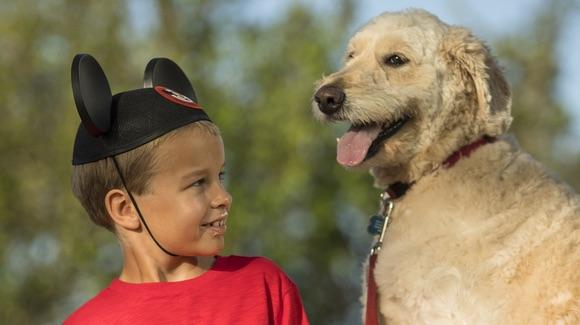 Dogs now welcome at select Walt Disney World  hotels [© Disney. All rights reserved]