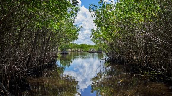 Everglades National Park [© CC BY-NC-ND 2.0 Vincent Lammin https://www.flickr.com/photos/vincentlammin/]