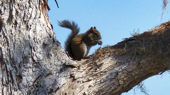 Cute squirrel in a tree