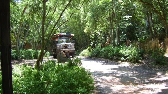 Kilimanjaro Safaris at Disney's Animal Kingdom