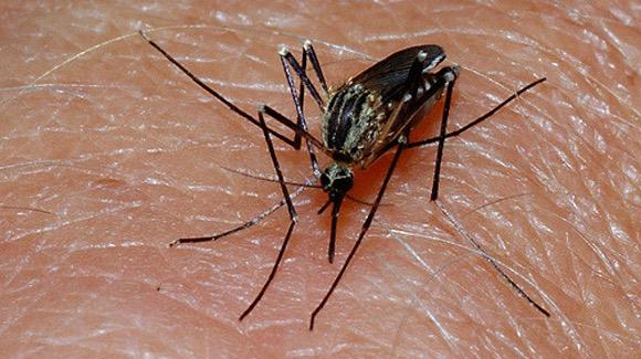 Mosquito bite [© CC-BY 2.0 dr_rellinge, https://www.flickr.com/photos/agder/]