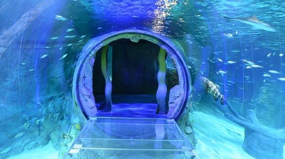 360 Degree Tunnel at the Sea Life Aquarium