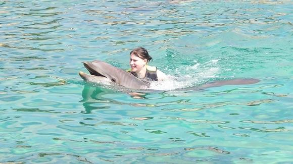 Hitching a ride, dolphin style