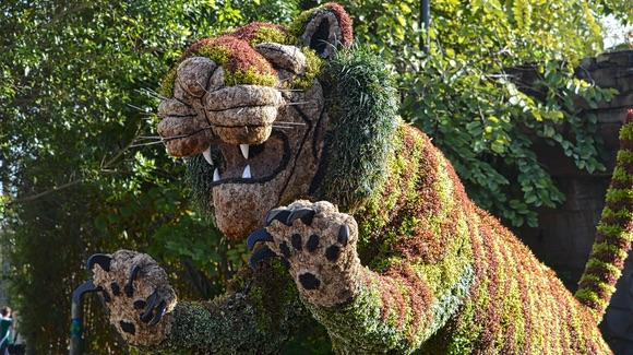 Tiger topiary at Busch Gardens